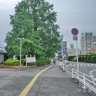 春日部のシンボル銀杏松の木を眺めて真っすぐ進みます。